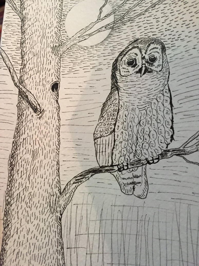 Barred owl by GentlestGiant