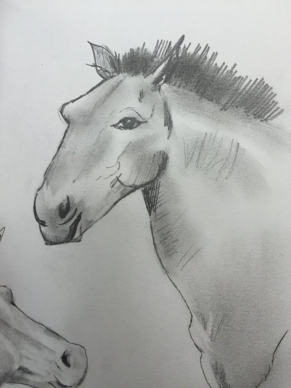 Przwervalski horse by GentlestGiant