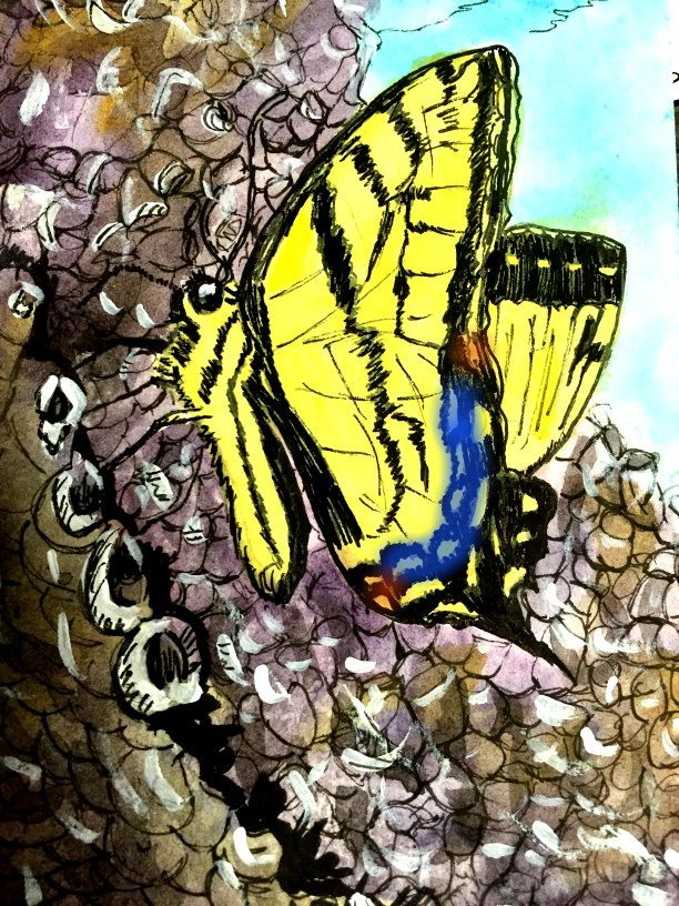 Butterfly Razo by GentlestGiant