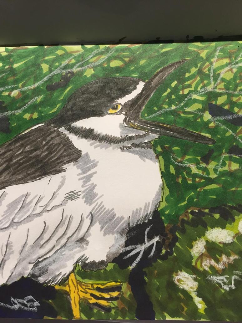 Preliminary sketch of black capped night heron by GentlestGiant