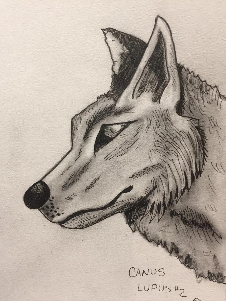 Wolf  portrait  by GentlestGiant