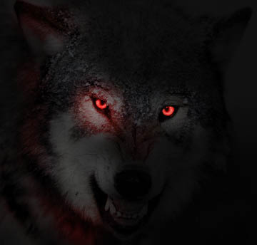 Angry black wolf red eyes - photo#3