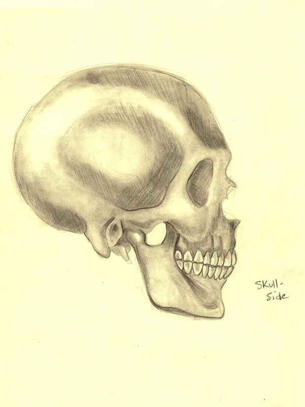 Skull: Side Profile by xTrickx