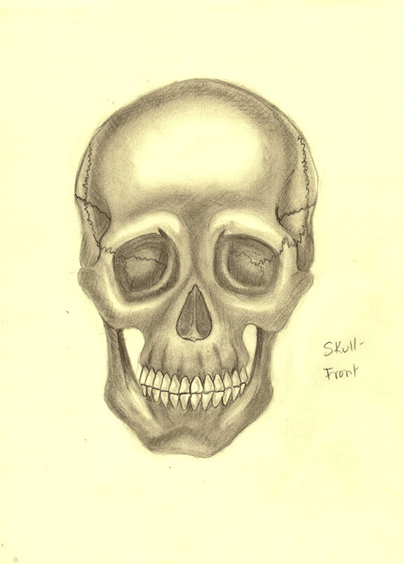 Skull: Front Profile by xTrickx