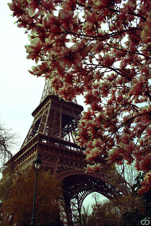 Au pied de la tour eiffel by photomomo on deviantart for Chaise pied tour eiffel