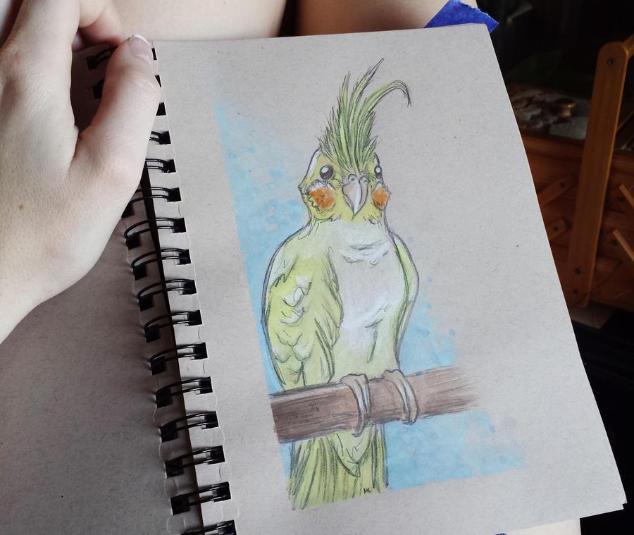 Watercolor Cockatiel by starbuxx