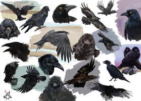 Sketches ravens by Sapfira-Dragon