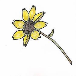 New Mexico Chocolate Flower