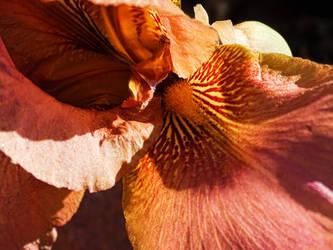 Pass into the Iris