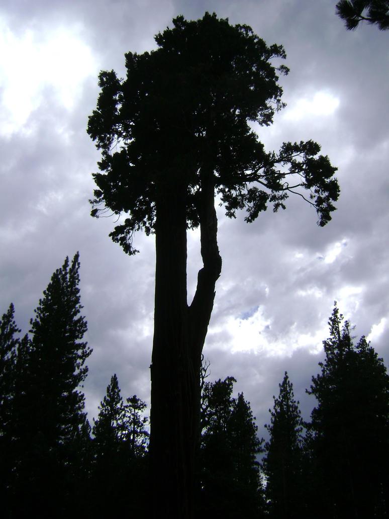 Tree in Silhouette by SilverWynd