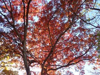 A Bright Autumn Day