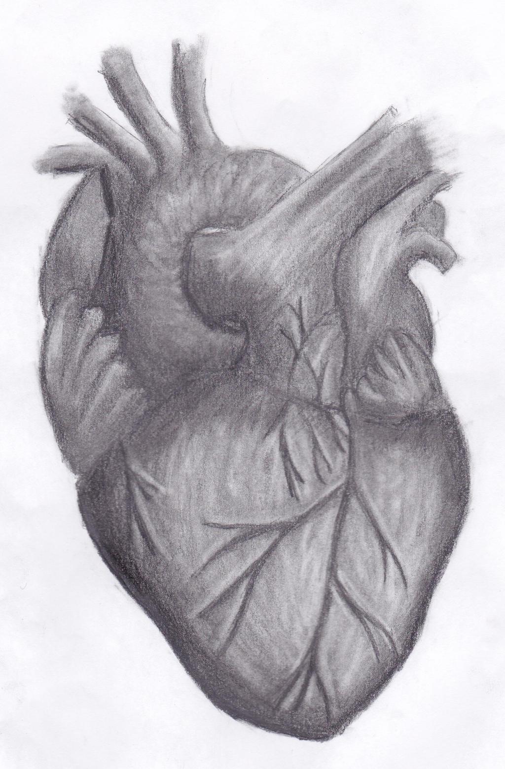 Сердце с карандашом картинка