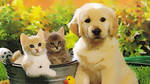 Dog and Cats Retouch