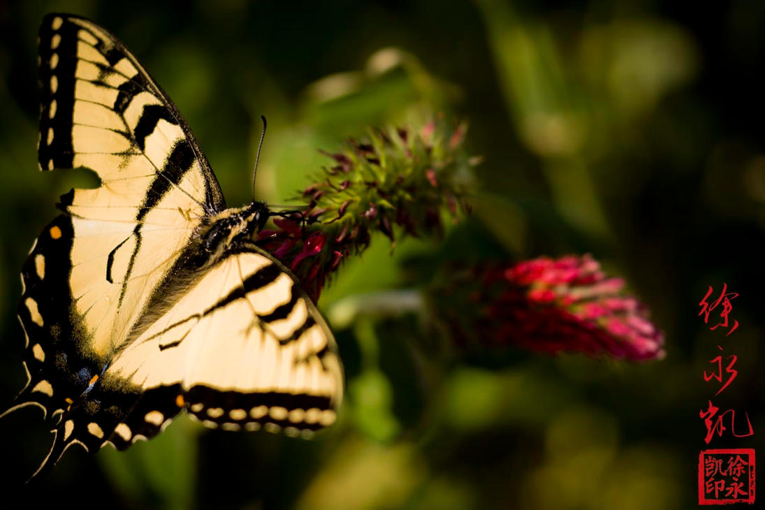 Butterfly Yellow by juhitsome