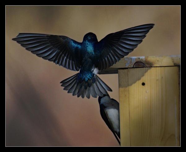 Swallow Landing by Karl-B