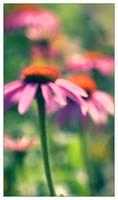 Purple Cone Flower Bokeh