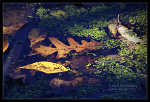 Oak Leaf and Duckweed by Karl-B
