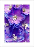 Purple Delphinium by Karl-B