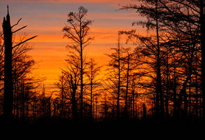 Cypress After Sunset by Karl-B