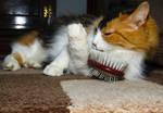 I'm Brushing..