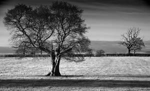 Tree Life