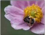 Bee + Pollen
