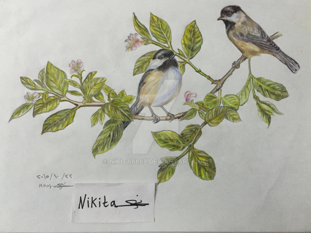 Drawing Two birds by nikita6669