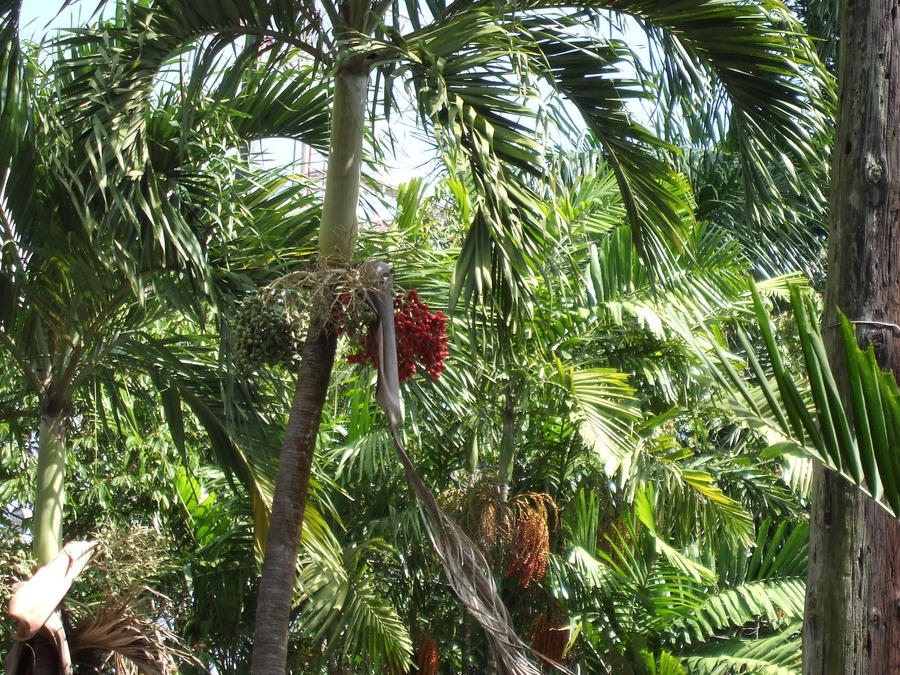 palm tree jungle by voyagernoel66 on deviantart