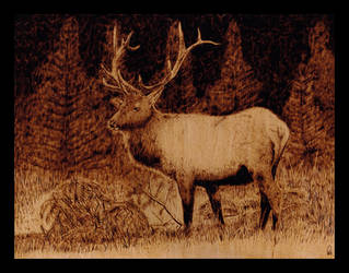 Deer_Pyrography by zwillhyper