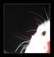 A Ferret's Eye by Harayken