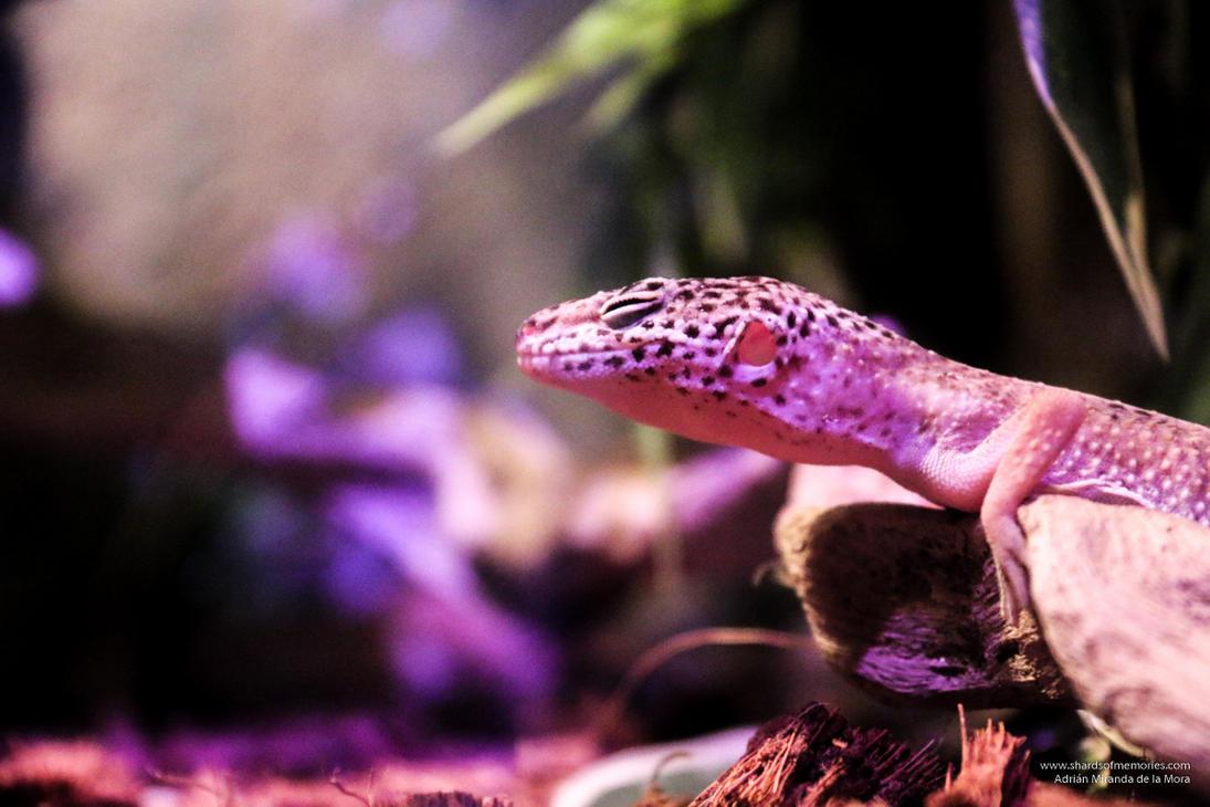 Zen Lizard by gotenkun