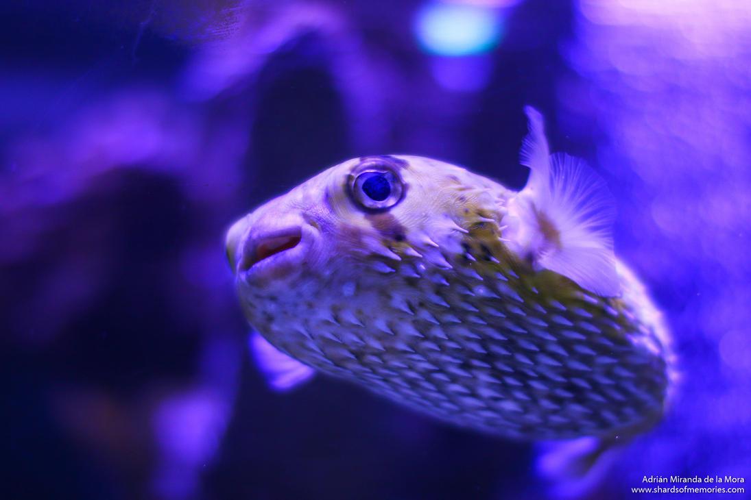 Blowfish by gotenkun