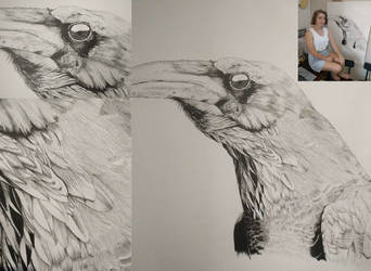 Crow For Portfolio-01 by etheet