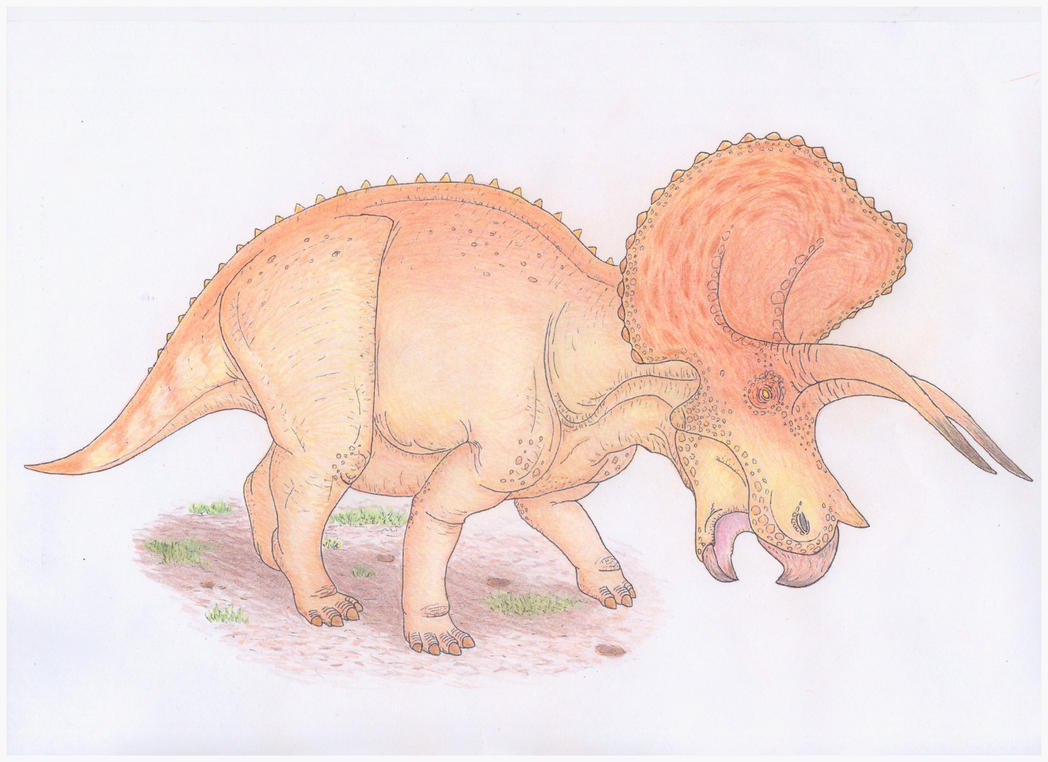 Triceratops coloured by Aesirr