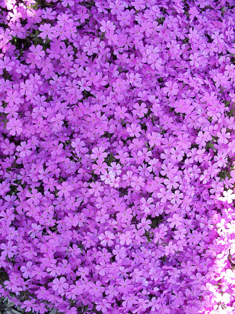 little purple flowers by annaica on DeviantArt