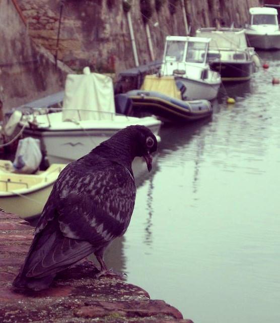 Mature Upskirts Seduction blackwhore