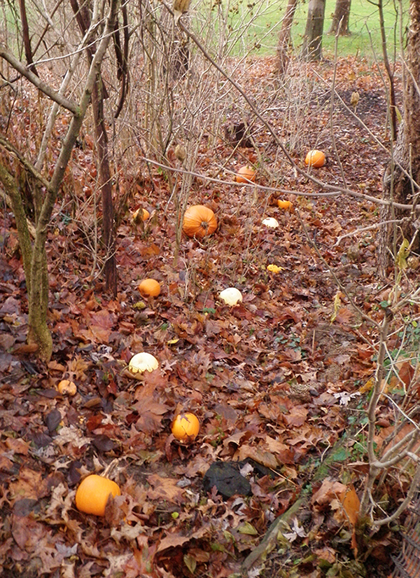 Pumpkin Path #1 by Lepus-Marj