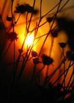 sonoran sundown by dresdenblue