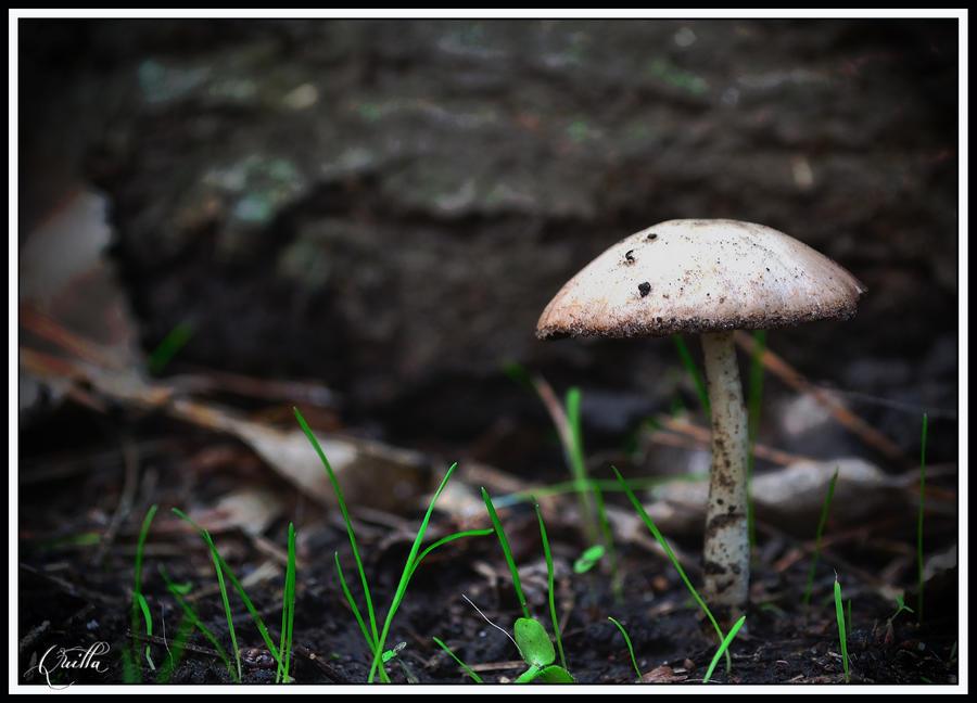 (F) Puros hongos