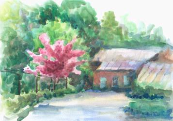 Sun rays through blooming sakura by ringonoki