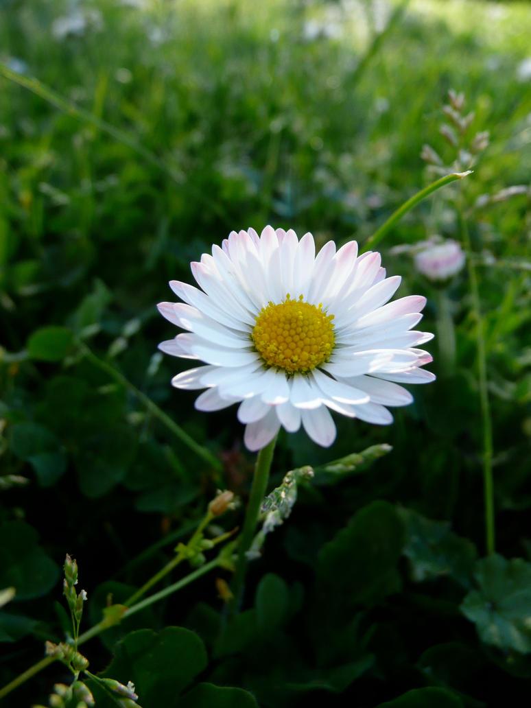 Etoile du printemps by Cathita