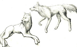 Wolves by Aniwolf