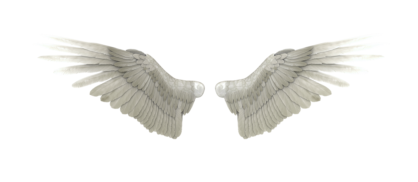Baby angel wings png