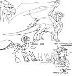 Dragon anatomy 1