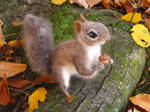 Needle Felted Gray Squirrel