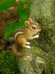 Needle Felted Chipmunk