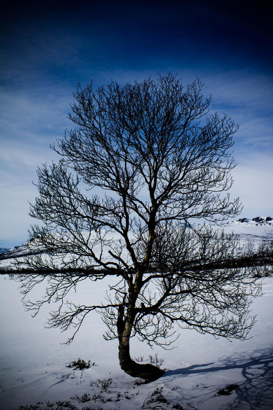 Bare Tree by jenz182