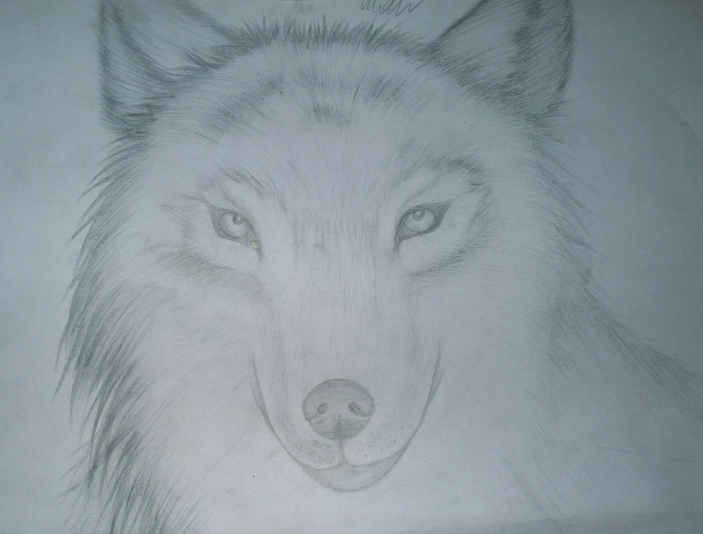 Wolf Head (Fur Practise) by NightPhantomXD