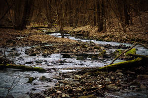 Forest Creek by MoonKey19
