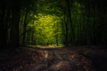 In the woods VIII by MoonKey19
